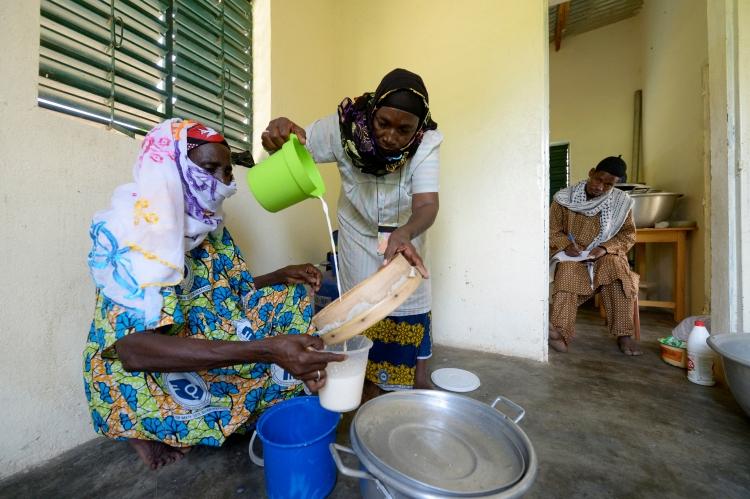 Das weiße Gold:  Wie globalisierte Milchwirtschaft Kleinbauern ihrer Märkte beraubt